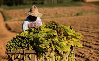 Agricultural products: South American opportunities